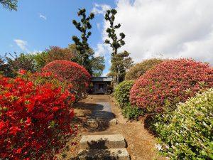 須賀川の大桑原つつじ園2