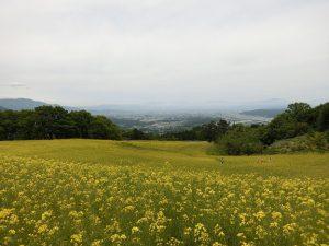 会津喜多方 三ノ倉高原の菜の花畑