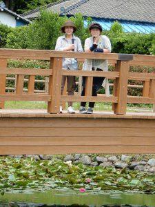 二ツ沼公園蓮の沼