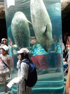 旭山動物園のアザラシの行動展示