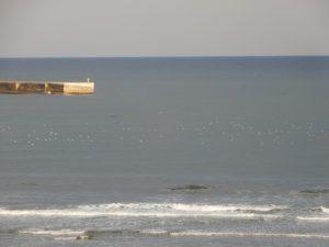 四倉海岸に海鳥たち
