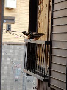 本社から鳥のさえずりを聞く
