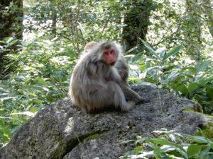 野生のお猿