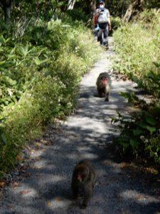 前を行くお猿