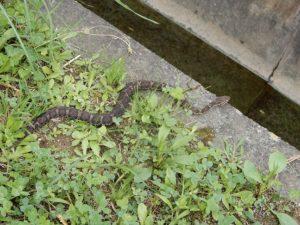 広野工場に幸福の蛇1