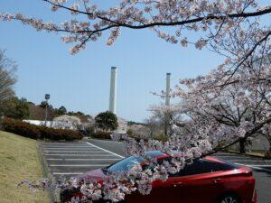 桜の隙間から東電火力の煙突を見る